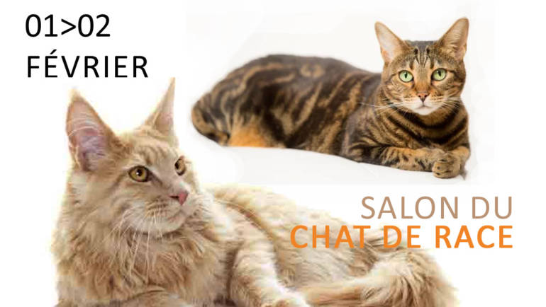 <span style='color:#8B1434;font-size:12px;'>01 & 02 février</span><br> Salon du Chat de Race