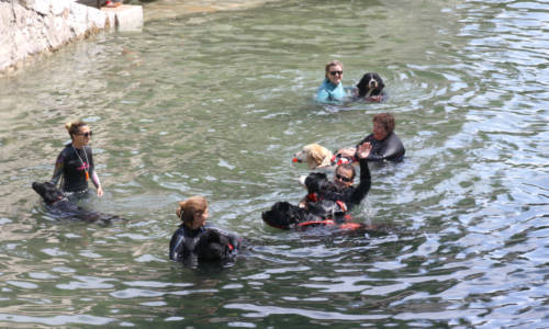 web Huv chiens sauveteurs 1