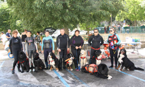 web Huv chiens sauveteurs 2